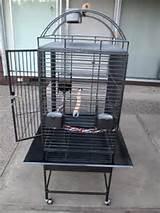 Reptile Cage In California Photos