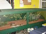 Photos of Reptile Cage Plans Online